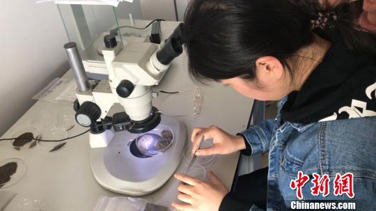四川凉山地区考古发现新石器时代晚期已有种植业