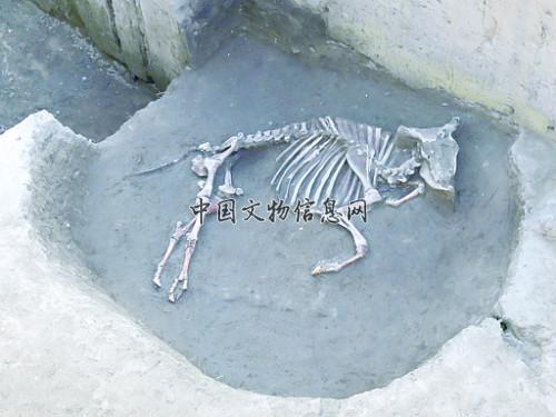 河北肃宁后白寺遗址发现二里头及晚商遗存